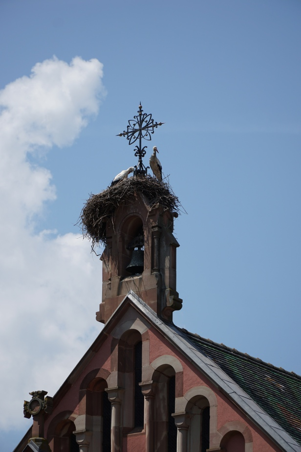 Stork nests in town